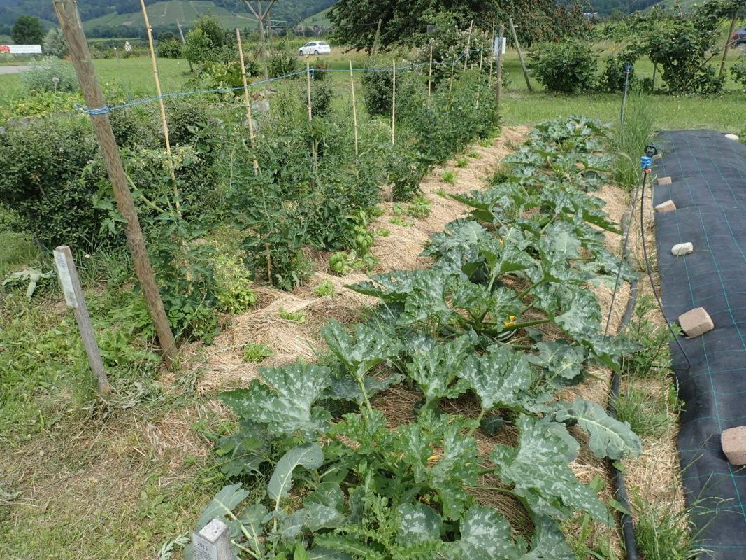 Sol Argileux Avantages Inconvénients jardinage sans travail du sol : saison 4 – pôle maraîchage